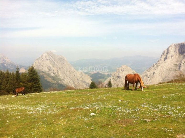 Horse on the mountain
