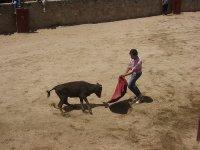 Toreando la vaquilla