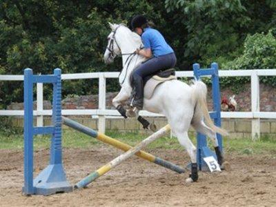 Christmas equestrian camp, Vizcaya