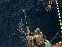 航行后金枪鱼之间的游泳