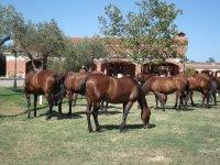 Cavalli che si nutrono della fattoria