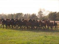 Cavalli che pareggiano sul posto