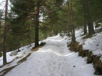 Cross-country skiing in Cercedilla, Madrid