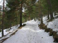 Esquí de fondo en Cercedilla, Madrid