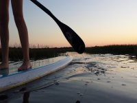 Rowing on the sup -999 table- Course of sup in the waters of huelva