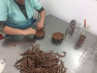 Visit the canned anchovy factory