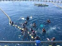集体跳水在海