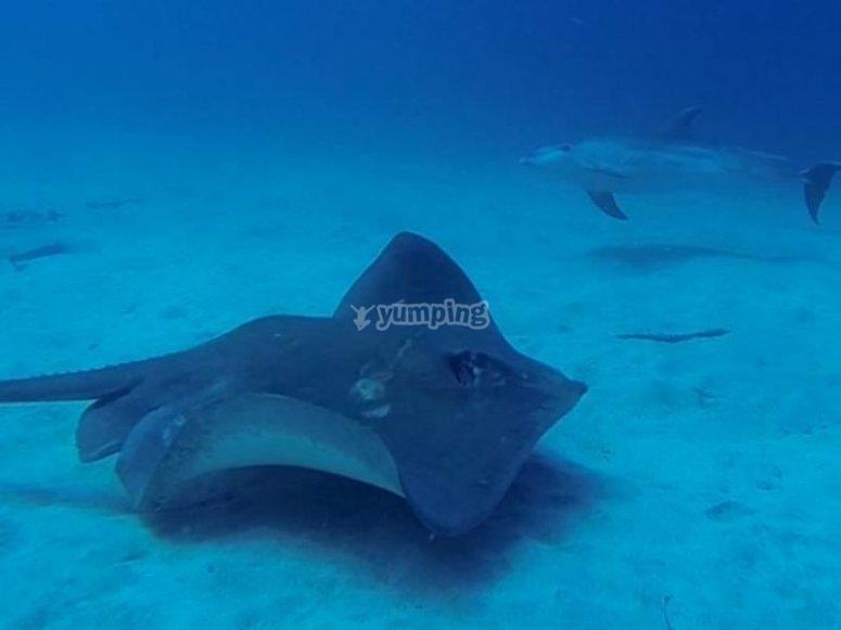 delfin y manta