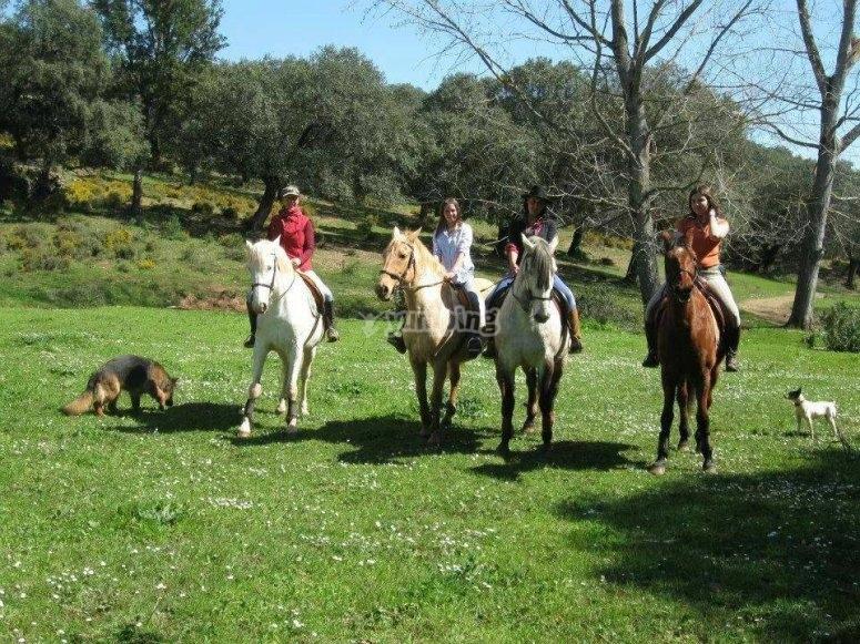 caballos y bosque