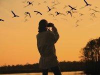 Fotografiando aves