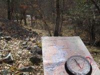 Buscando la direccion correcta en el bosque