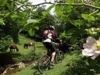 En bici junto al arroyo