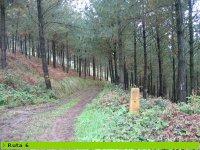 btt por pistas forestales