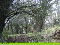 disfruta de nuestros bosques