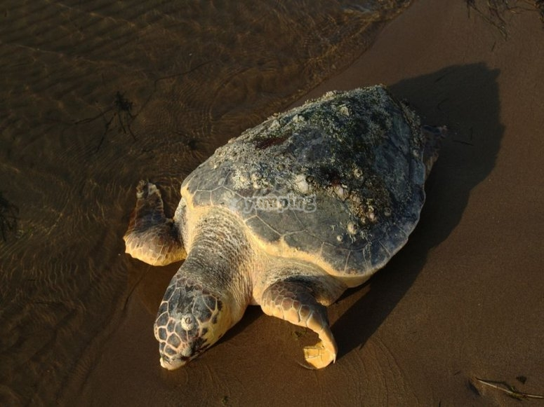 ruta senderismo a isla de las tortugas tenerife