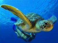 snorkel entre tortugas tenerife