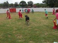 Amateur bullfighters