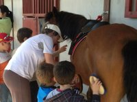 Brushing and pampering the horse