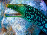 marine fauna of tenerife