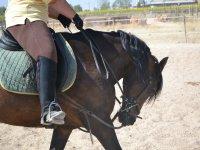 Aprendiendo diferentes técnicas de equitación