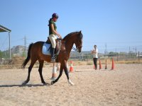 Training with the horse