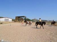 Basic level riding lessons
