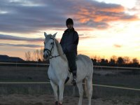 Jinete sobre el caballo en la pista