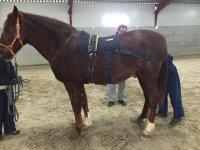 Maravilloso caballo dejándose cuidar