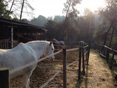 Ruta a caballo Barcelona con Calçotada 2 horas