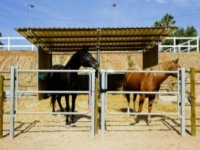 cuadras de caballos