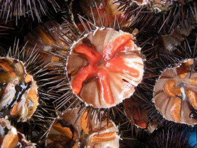 Sailboat tour and sea urchin tasting for adults