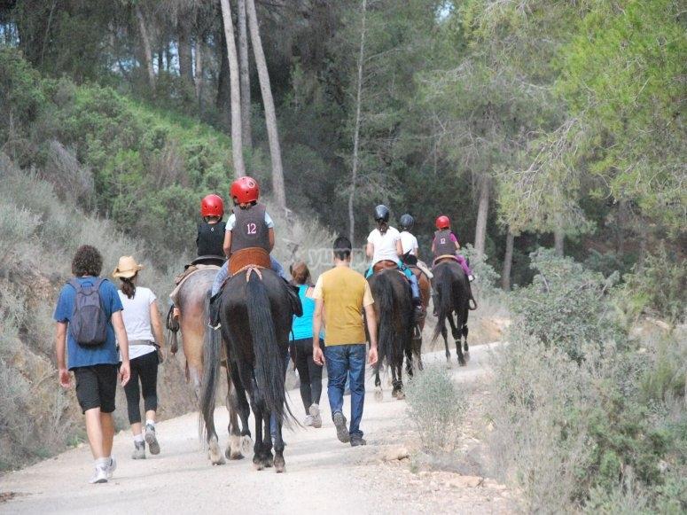 batallon caballos