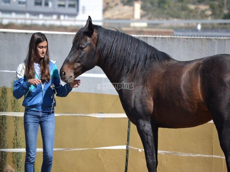 intentando convencer al caballo