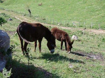 儿童驴骑塔拉戈纳15分钟