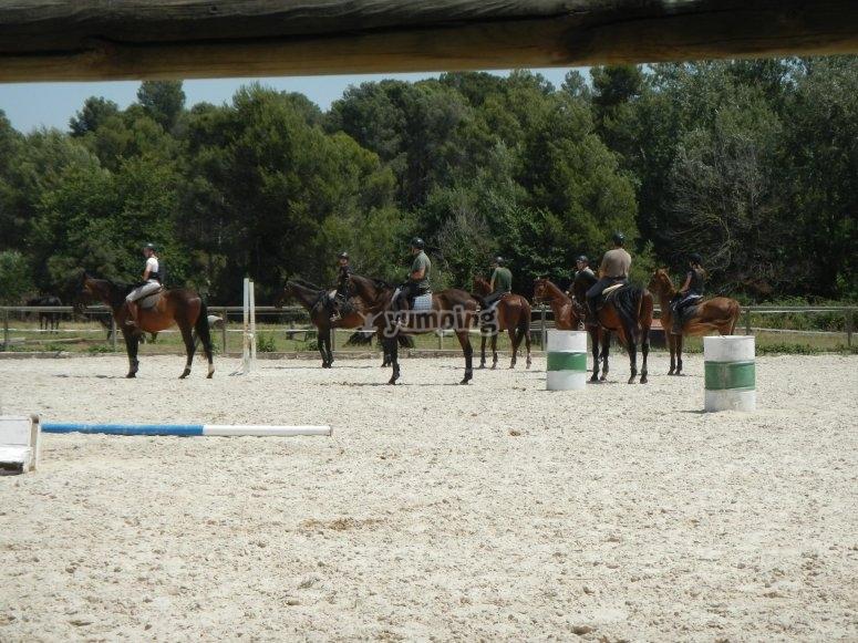 varios caballos en pista