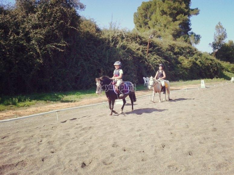 caballos en zona amplia