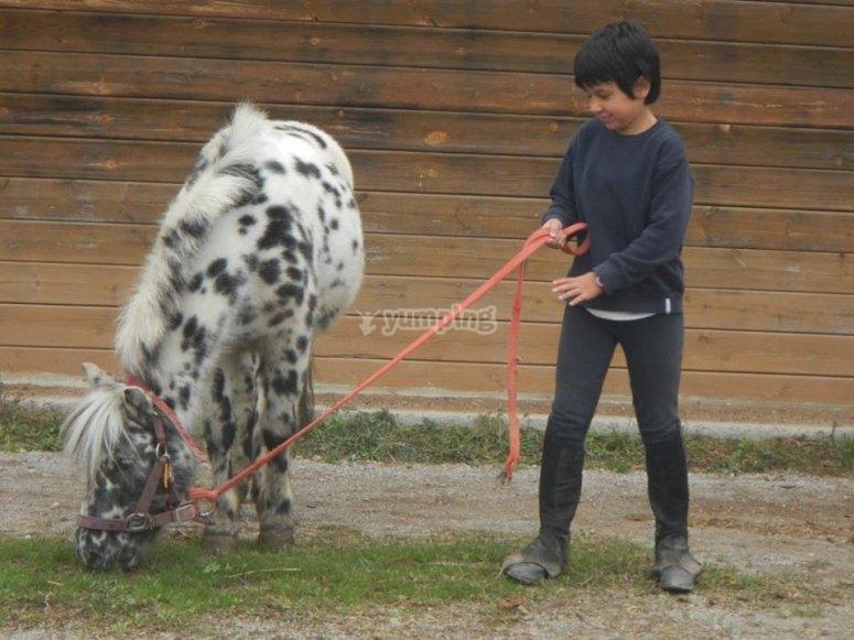 Llevando al poni de la cuerda