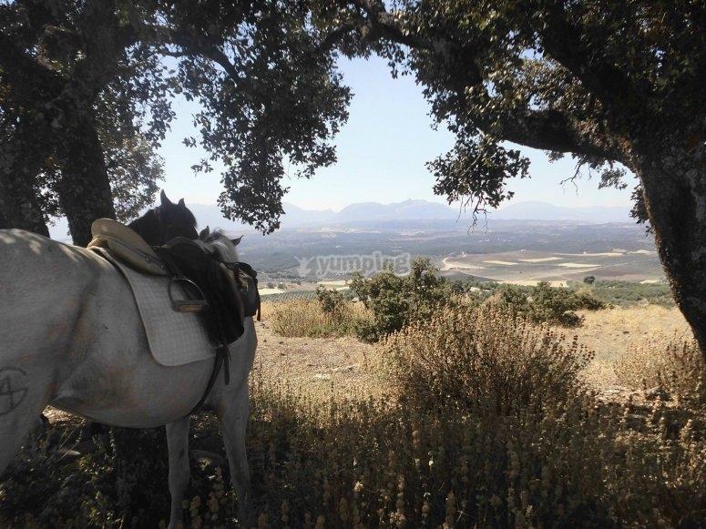 paisaje ponis