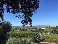 葡萄园景观