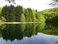 Escursione alla foresta di Irati