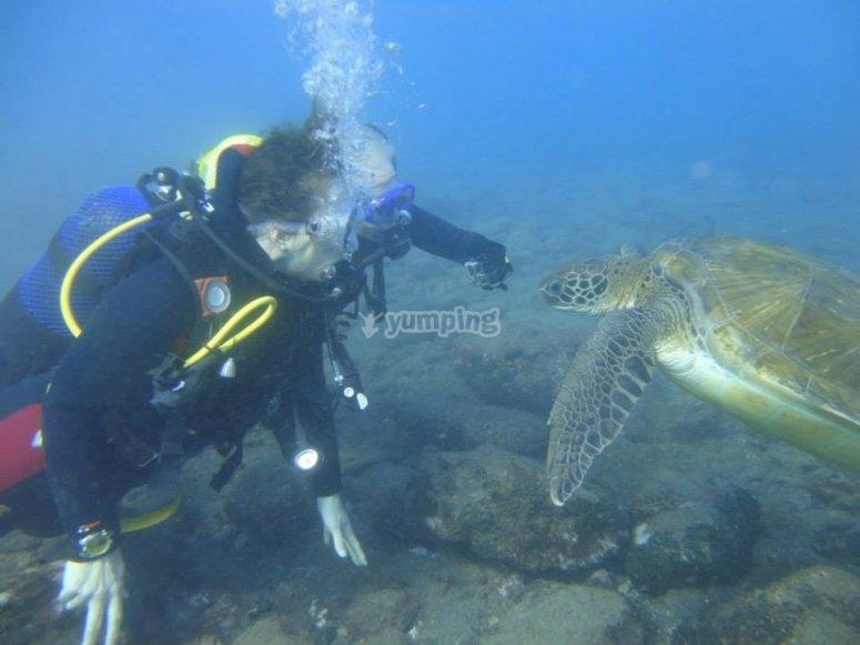 Looking at turtles
