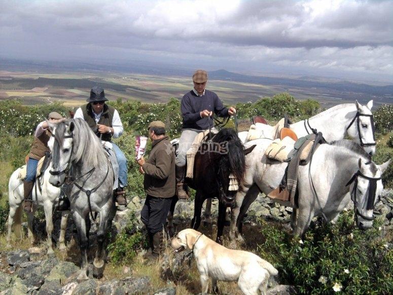 Grupo de caballos en Don Benito