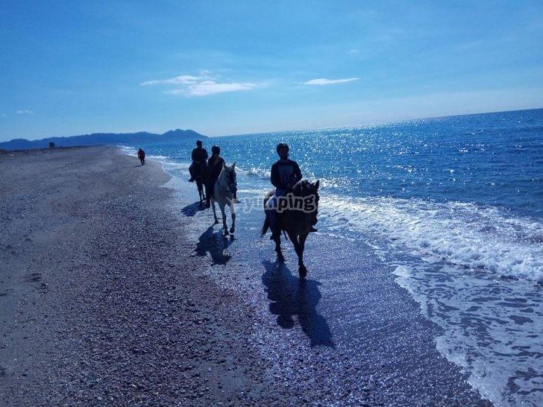 Grupo de caballos en la playa de Almeria
