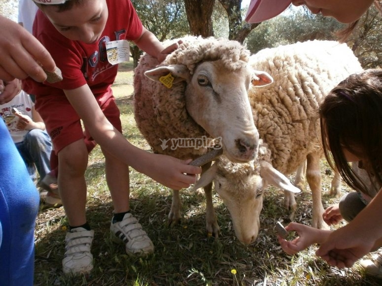 Cuidando a las ovejas