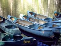 Canoes in the water