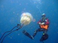 buceando junto a una medusa