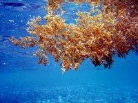 mundo subacuatico de Costa Tropical