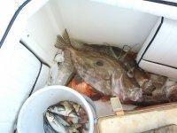 Buena pesca en Ibiza