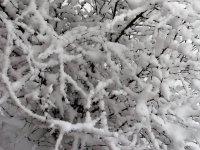 Nieve caida sobre las ramas