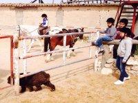 Con los animales